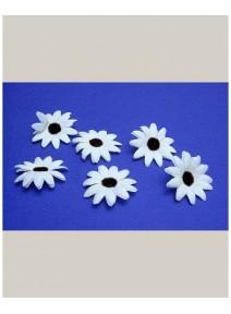 fleursx24/d5cm blanc cassé
