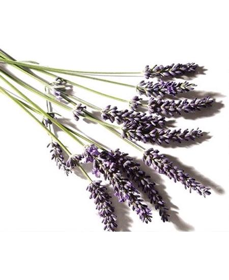 fleurs de lavande 100grs/100% naturel