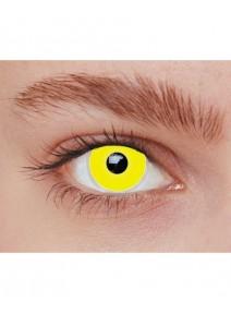 lentilles iris jaune 1AN