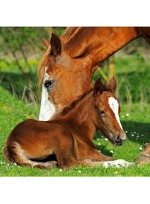serviettesx4/3 plis chevaux