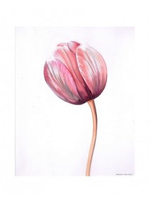 image 3D/24cmx30cm tulipes