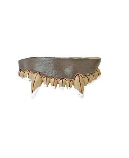 dentier 12 dents vampire